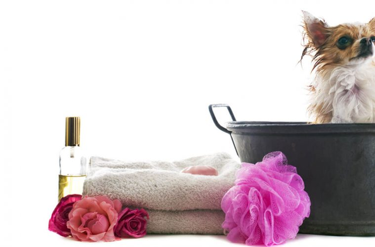 Mobile pet grooming Miami lakes